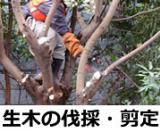 樹木の伐採や剪定も承っております。 樹木の手入れ、処分でお困りごとがございましたら是非お任せください。