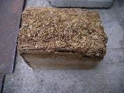 シロアリは材木の中を食害します。